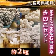 60-02_重永さんの麦飯石無農薬きのこセット約2kg