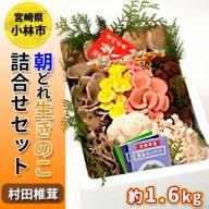 朝どれ生きのこ詰合せセット<約1.6kg:村田椎茸> 31-SMS01