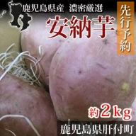 【P14008】鹿児島県産 濃密厳選安納芋《先行予約》(約2kg)