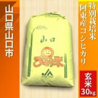 C-013 特別栽培米阿東産コシヒカリ玄米30kg