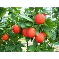 国産(美浜町産)ブラッドオレンジ 『モロ種3kg入り』