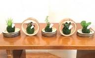 竹プランター「美」竹平置き3個・竹輪切り2個(観葉植物含むミニ苔玉5個付き)