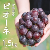 [先行予約]種無しぶどう<ニューピオーネ>1.5kg ※2021年9月上旬から10月下旬の収穫期間内出荷【C250】