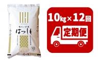 定期便 揖斐郡産  味のいび米はつしも精米10kg×12ヶ月