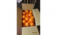AV6021_がんこ果物屋の厳選【秀 ぽんかん】約7~7.5kg 3L~L