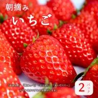 【ふるさと納税】朝採り直送 新鮮いちご 2パック