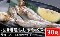 北海道産ししゃもメス(30尾 規格:大)※1尾約14~17g