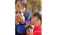 B-407  三升米(なつほのか)玄米 10kg(5kg× 2袋) 鹿児島県 薩摩川内市 産【10月より順次発送】