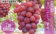 ●先行予約受付●岡山県産 冬のぶどう 紫苑(種無し)1房(約800g)