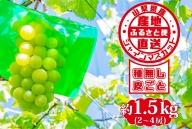 山梨県産 シャインマスカット 約1.5kg【2021年8月下旬~10月上旬頃発送】