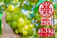 山梨県産 シャインマスカット 約3kg【2021年8月下旬~10月上旬頃発送】