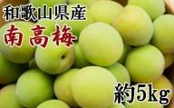 【先行予約】【和歌山名産】南高梅約5kg(サイズ混合)・秀品