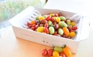 見て楽しい、食べて美味しい。☆トマトの宝石箱☆ジュエルスピカ(1.3kg)