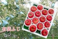 5~8月 りんご 5kg程度 青森産 夏の「特選」有袋ふじ 大玉12~16個