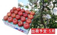 5月 【訳あり】冷た~い 家庭用 ふじりんご 約5kg 【青森りんご・有袋栽培・CA貯蔵・クール便】