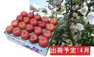4月 【訳あり】冷た~い 家庭用 ふじりんご 約5kg 【青森りんご・有袋栽培・CA貯蔵・クール便】