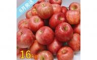 【訳あり】 6月 りんご 16kg程度 青森産 有袋ふじ