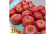 【訳あり】 6月 りんご 10kg程度 青森産 有袋ふじ