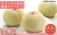 岡山県産 白桃 厳選ロイヤル(光センサー選果)約1.5kg(6~7玉)