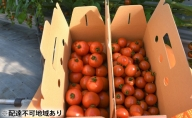 田んぼ屋たなかの【トマト食べ比べセット】
