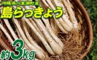 沖縄県八重瀬町産 島らっきょう約3kg