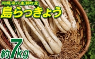 沖縄県八重瀬町産 島らっきょう約7kg