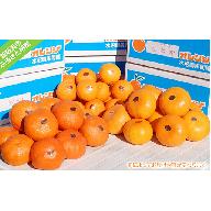 愛媛の厳選柑橘A (出荷内容は旬により異なります:出荷12月~3月限定)