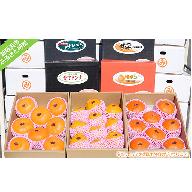 愛媛の厳選柑橘C (出荷内容は旬により異なります:出荷12月~3月限定)