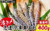 【訳アリ】活き〆急速冷凍車エビ(生食可・約400g)