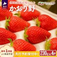 北海道浦河産いちご「かおり野」250g×4P[B13-113]