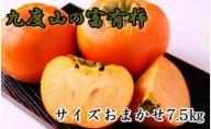 ZD92002_【先行予約】[柿の名産地]九度山の富有柿約7.5kgサイズおまかせ【2021年10月下旬発送開始】