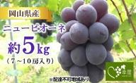 吉備高原朝採り ニューピオーネ 約5kg(7~10房入り)