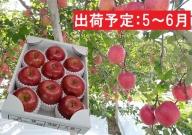 5~6月 初夏りんご 特選サンふじ約3kg(スマートフレッシュ貯蔵)【山形りんご・大江町産】