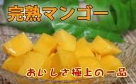 鹿児島県産 南国の恵み 完熟マンゴー(ご家庭用約2.5kg)【先行受付】