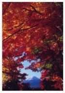 富士山写真大賞  額装写真「秋色のフレーム 河口湖にて」(全紙  額装サイズ約530×640mm)