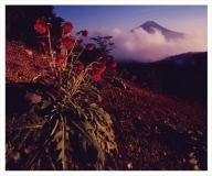 富士山写真大賞  額装写真「秋華 三つ峠より」(全紙  額装サイズ約530×640mm)