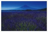 富士山写真大賞  額装写真「富士とラベンダー 大石公園」(全紙  額装サイズ約530×640mm)
