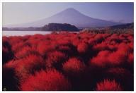 富士山写真大賞  額装写真「爽秋の湖畔 河口湖大石公園」(全紙  フレームサイズ約530×640mm)