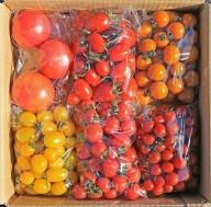 【マルヨシ園芸】トマト食べ比べセット 3kg