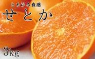 とろける食感!ジューシー柑橘 せとか 約3kg【予約】※2022年2月下旬頃~2022年3月上旬頃発送(お届け日指定不可)