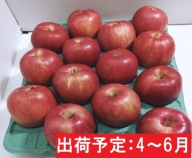 【訳あり】 2~6月 りんご 10kg程度 青森産 ジョナゴールド