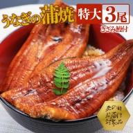 B2-0831/【土用丑の日】鹿児島県産特大うなぎの蒲焼き(無頭)200g×3尾+きざみ鰻蒲焼付き