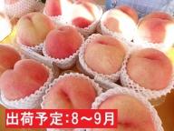 8~9月 大玉「白桃」約3kg・秀品7~9玉【山形もも】