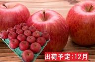 12月 贈答規格サンふじ約5kg 【山形りんご・大江町産】