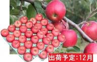 12月 贈答規格サンふじ約10kg 【山形りんご・大江町産】