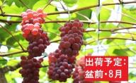 【盆前・8月】デラウェア約3kg秀L~2L 【山形ぶどう・大江町産】