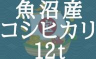 新潟県魚沼産コシヒカリ 5kg×100袋 ※24回定期便 安心安全なヤマトライス H074-244