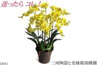 綺麗で丈夫な三河陶器で贈る光触媒オンシジューム5本立(茶色の陶器×黄色の花)H100-018