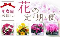 (341)季節のお花フラワーギフト定期便1年間!2ヶ月に1度お花が届きます。