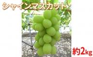 【2021年9月~10月発送 先行予約】長野市産シャインマスカット約2kg 矢島農園 ぶどう フルーツ